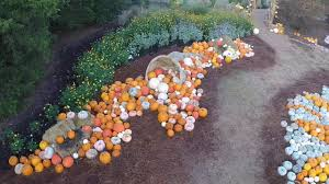 huntsville botanical gardens pumpkin display october 29 2016