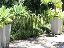 Garden Ideas Perth Agave And Grass Combo Paving Trim Backyard Gems Pinterest