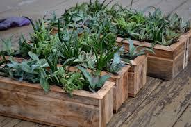 Unique Planters For Succulents by Succulent Planters Home Design Ideas