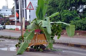 caution there s a banana tree grown right in middle of the road