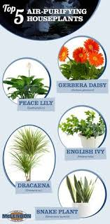 best plants for air quality top 5 air purifying plants indoor air quality houseplants and