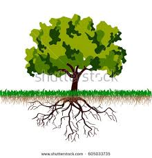 tree roots vector illustration stock vector 605033735