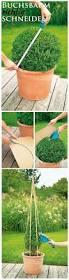 340 best garden images on pinterest garden ideas gardening and