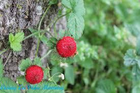 plants living la vida mommy