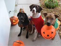 dog halloween costumes a few ideas for your little friend dogalize