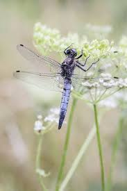 1639 best butterflies dragonflies u0026 other signs images on