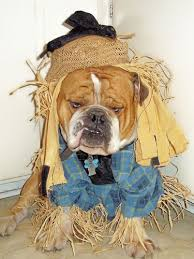 English Bulldog Halloween Costumes Halloween Bulldog Costume Costumes Blog