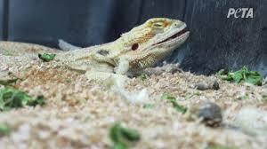 Backyard Reptiles A Longer Look Inside Reptiles By Mack Youtube