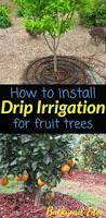 best 25 apple tree farm ideas on pinterest planting apple trees