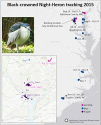 National Zoo Map Black Crowned Night Heron Expedition Blog Smithsonian U0027s National Zoo