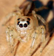 Image 325848 Misunderstood Spider Know - 98 best spiders images on pinterest butterflies jumping spider
