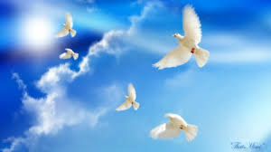 doves peace other animals background wallpapers on desktop