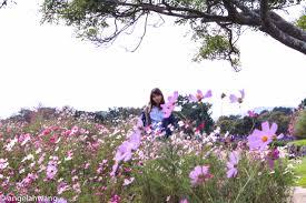 uminonakamichi seaside park angela hwang