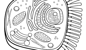 97 ideas animal cell coloring emergingartspdx