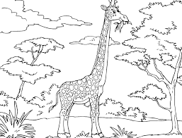 cute long neck animal giraffe coloring pages kids aim