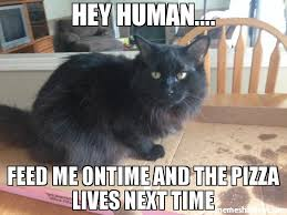 Feed Me Meme - hey human feed me ontime and the pizza lives next time meme