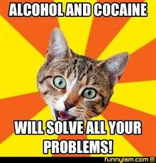 Cat Cocaine Meme - alcohol and cocaine will solve all your problems meme factory