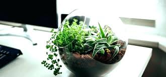 Best Plant For Office Desk Office Plants Office Desk Office Desk Plants Best Desk