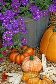 Fall Flowers Use Pumpkins Fall Flowers To Celebrate The New Season