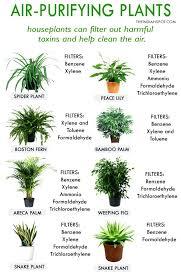 good low light plants good indoor plants best indoor plants for low light viewspot co