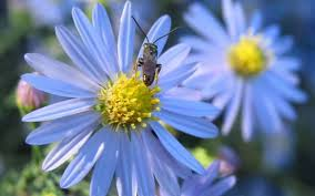 plants for native bees do your part for the birds and bees go native in your garden this