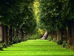 garden design garden design with beautiful garden hd wallpapers