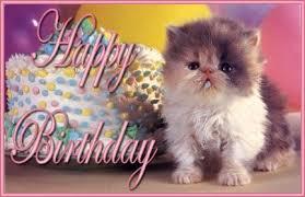 Kitty Meme Generator - happy birthday cat meme generator