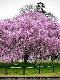 exotics trees and shrubs
