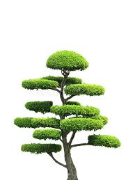 ornamental tree stock images image 3855834