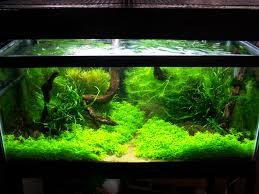 Aquascape Environmental Home Accessories Sophisticated Aquascape Designs If You Build A