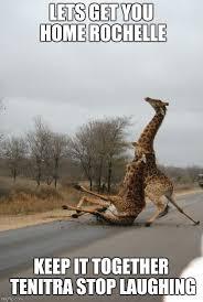 Giraffe Hat Meme - falling giraffe meme generator imgflip