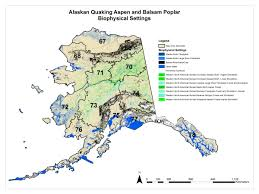 Alaska Fires Map by Alaskan Quaking Aspen And Balsam Poplar