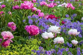 best perennials for gardeners in new england