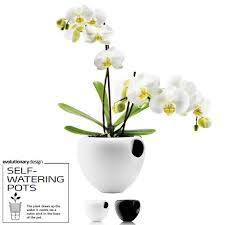 Self Water Pot Vase Eva Solo Self Watering Orchid Pot Relaxtribe