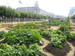 San Francisco Flower Garden by Harvesting San Francisco U0027s Victory Garden Popsugar Food