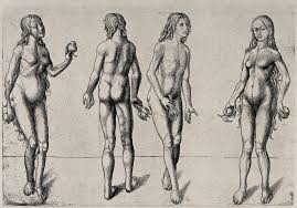 file four studies for adam and eve holding fruit heliogravure by