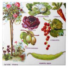 Garden Botanicals Summer Fruit Ceramic Tiles Zazzle