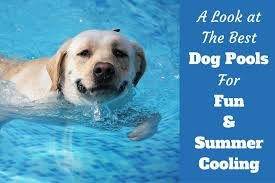 fun and cooling the best dog pool reviews for 2017
