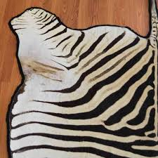 Animal Skin Rugs For Sale Zebra Skin Rug For Sale At Safariworks Taxidermy Sales Sw8910