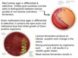 biol 3132 9th0 biol 3132 microbiology lab section 37553 tue thu