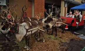 santa u0027s reindeer at kazoo toys