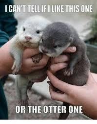 Otter Memes - 25 best memes about otter meme otter memes