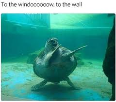 To The Window To The Wall Meme - to the window to the wall turtle meme