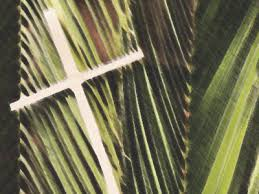 where to buy palms for palm sunday sunday of the palm sunday holy communion 10 am