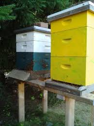Backyard Beehive Services U2013 The Wholesome Hive