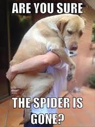 Funny Spiders Memes Of 2017 - dog meme is the spider gone yet