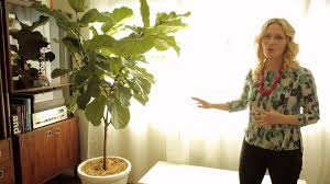how to create an indoor plant garden youtube
