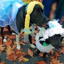 Sheep Dog Costume Halloween Pets Wearing Halloween Costumes Send Photos Mainetoday