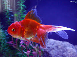 fish is the queen of water entertainmentsinfo
