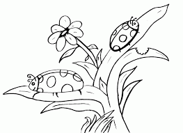 printable bug pictures coloring